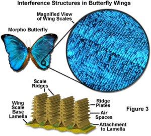 morpho butterfly technology