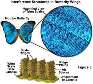 morpho butterfly technology